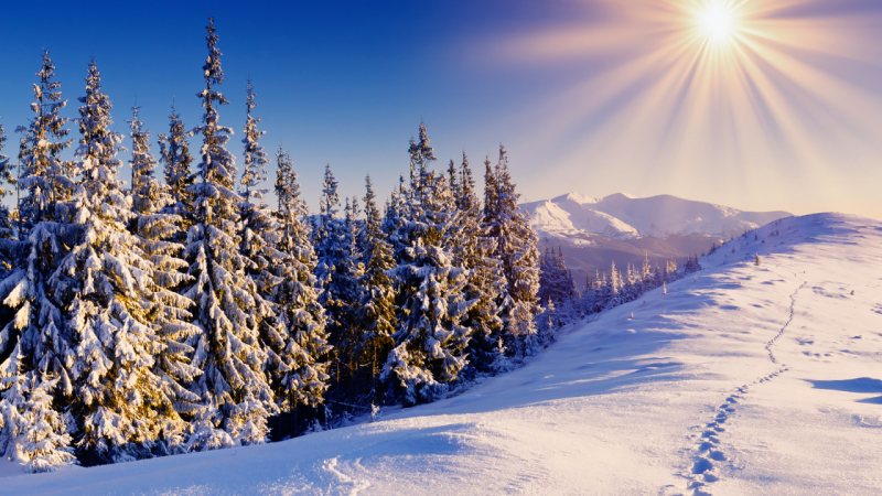 vacanta_de_iarna